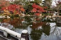 京都府 紅葉の円山公園