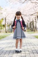 桜並木に立つ小学生の女の子