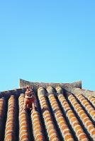 沖縄県 夏の竹富島 木造赤瓦の屋根とシーサー