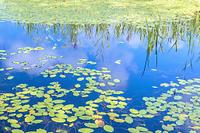 福島県 レンゲ沼