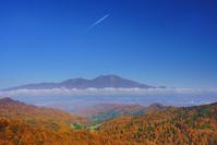 長野県 軽井沢町 八風山より浅間山と紅葉のカラマツ林と飛行機雲