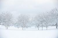アメリカ合衆国 雪原