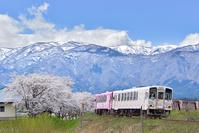 山形県 フラワー長井線 桜と朝日連峰