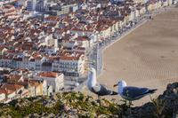 ポルトガル カモメとナザレの家並み