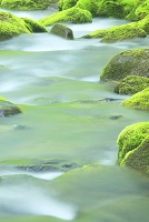 青森県 奥入瀬渓流 三乱の流れ