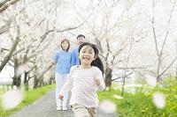 桜並木の下を走る女の子を見守る両親