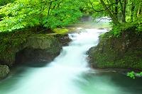 秋田県 伏伸の滝