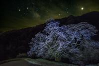 長野県 駒つなぎの桜