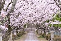滋賀県 長浜市 日吉神社
