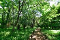 東京都 国分寺市 武蔵国分寺公園 野鳥の森