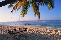 モルディブ 椰子の木のブランコ