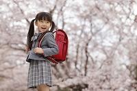 桜と新入学の赤いランドセルの女の子