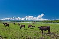 秋田県 ふれあい牧場