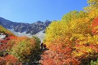 長野県 紅葉の木々と奥穂高岳