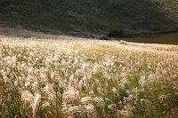 奈良県 曽爾村