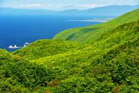 勝澗岬のブナ新緑