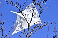 木にひっかかった凧