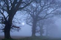 イギリス 月と林と霧