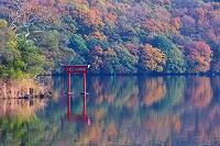 静岡県 紅葉の一碧湖