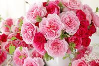 3種類のピンクのバラ