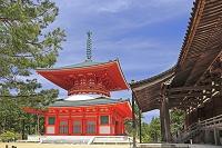 和歌山県 高野山の壇上伽藍の根本大塔
