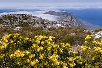 南アフリカ共和国 テーブルマウンテンの山頂