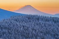 長野県 霧氷の林と富士山