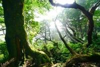 鹿児島県 屋久島の稜線