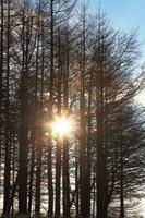 北海道 カラマツと射光