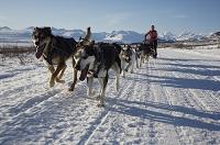 アラスカ 犬ぞりに乗る女性