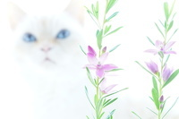 ネコとサザンクロス