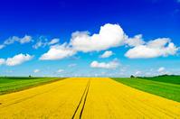 北海道 広大な丘の小麦畑