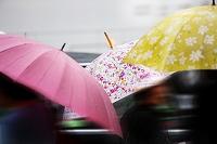 梅雨 雨の日の傘
