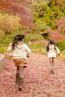 公園の子供 松ぼっくりや落葉を拾う