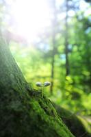 樹林の中の双葉と木漏れ日