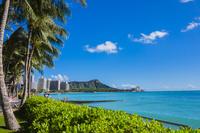 ハワイ ダイアモンドヘッドとヤシの木