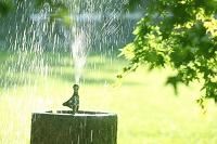 新緑と水しぶき