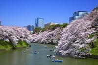 東京都 千鳥ケ淵の桜