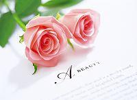 ピンクの薔薇とビューティ