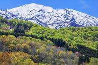 山形県 萌黄の飯豊連峰 朳差岳