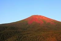 山梨県 滝沢林道 赤富士