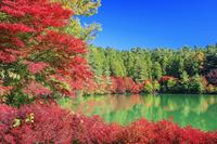 山梨県 紅葉の南伊奈ヶ湖