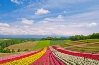 北海道 雲湧く空と四季彩の丘