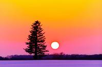 北海道 一本の木が立つ雪原に沈む夕日