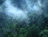 奈良県吉野郡上北山村 自然林と杉の植林 朝靄