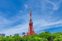 東京都 新緑の芝公園と東京タワー