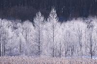 北海道 樹氷(霧氷)