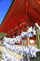 京都府 平安神宮の初詣