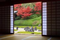 京都府 光明院 本堂越しに見る波心庭と紅葉