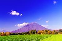 北海道 秋の羊蹄山と緑のビート畑